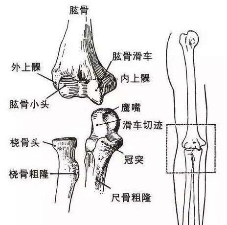 肘关节严重粉碎性骨折,正值壮年的我,是这样恢复如初的