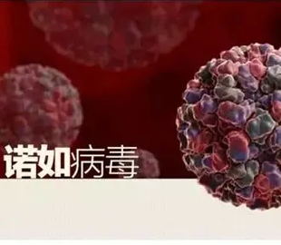 诺如病毒感染性腹泻高发季来临,卫健委发布防控提示